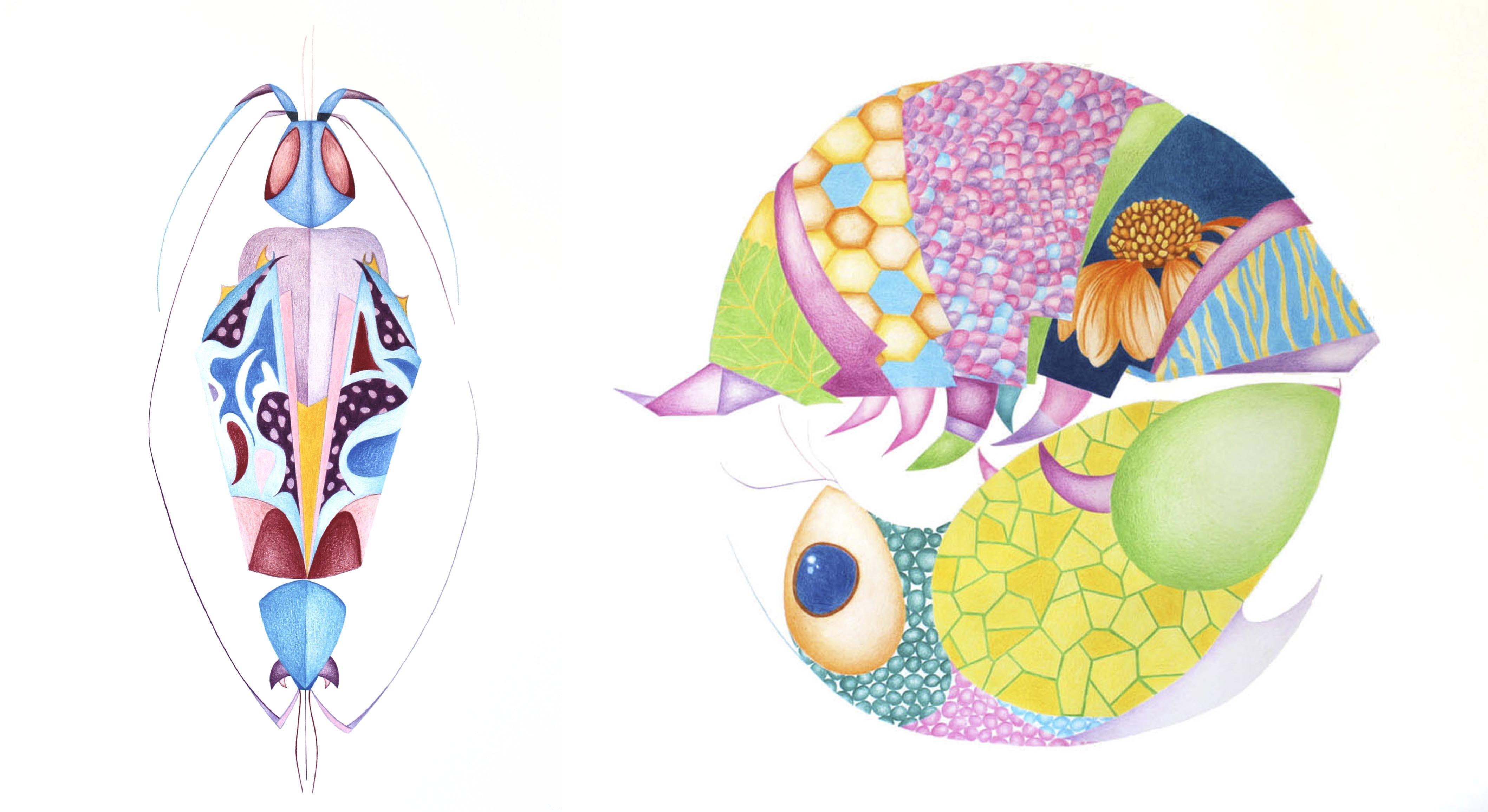 Metamorfosis, amor e insecticida. (Serie). Lápices de colores sobre papel. 2014.